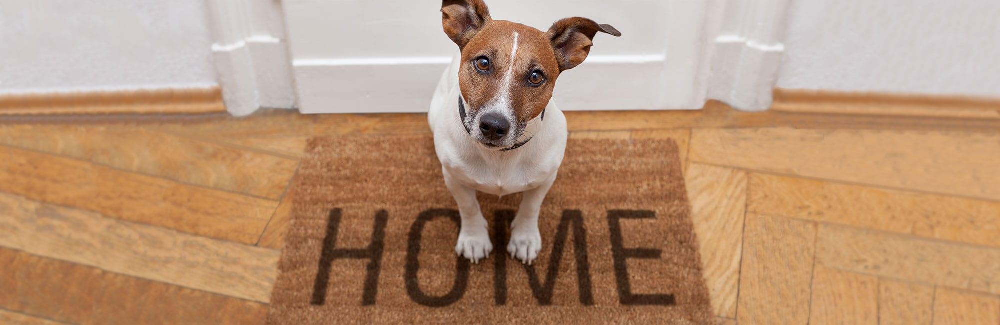 dog-home